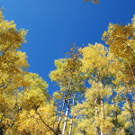 Autumn Aspens New Mexico by Lynn Kelly